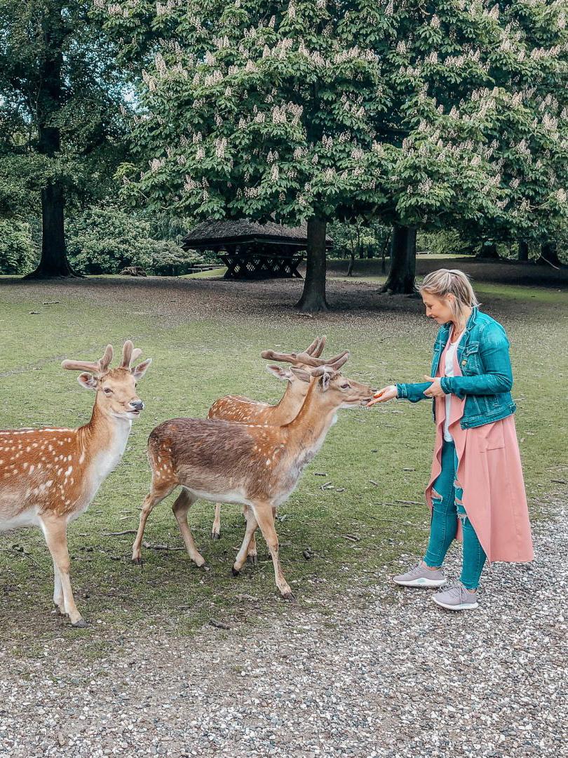 Aarhus Denmark Travel Guide Primetime Chaos Marselisborg Deer Park